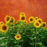 Τοπία για Ζωγραφική - Ανοιξιάτικα, Καλοκαιρινά, Φθινοπωρινά, Χειμωνιάτικα, Όμορφα, Μαγευτικά, Ξεχωριστά 35