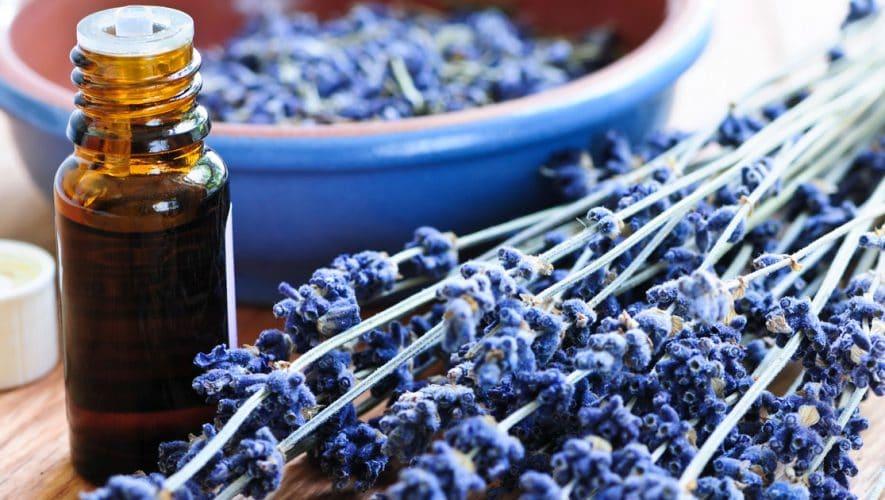 Λεβάντα: Αιθέριο Έλαιο, Καλλιέργεια, Ιδιότητες, Χρήσεις, Παρενέργειες, Τιμή