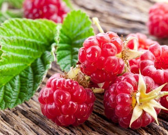 Σμέουρα: Καλλιέργεια, Ιδιότητες & Οφέλη για την Υγεία, Γευστικές Συνταγές